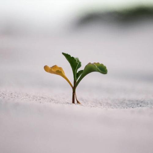 Grow_500x500
